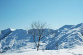 Tree and mountains on the winter day — Stock Photo