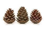 Three pine cones isolated on white background — Stock Photo