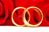Two gold wedding rings and red roses — Foto de Stock