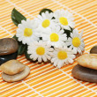 Camomiles and pebbles ready for aromatherapy session - Stock Photo