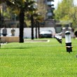 Стоковое фото: Green grass lawn with palms at the background