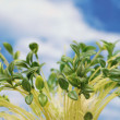Green leaves against the blue cloudy sky — Stock Photo