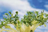 Зеленые листья против голубое небо облачно — Стоковое фото