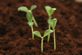 New life concept - seedlings growing in the soil — Stock Photo