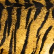 Stock Photo: Imitation of tiger leather as a background