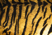Imitation of tiger leather as a background — Foto Stock