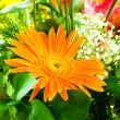 Gerbera flowers agaisnt green blurred background - Stock Photo