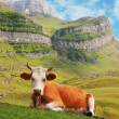 Stock Photo: Cow in high mountains
