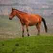 Horse at the top of hill - Stock Photo