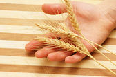 Hand holding wheat ears on a wooden board — Stock Photo