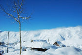 Tree and houses under snow in winter - Gudauri, Georgia — Stock Photo
