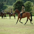 Horses at dressage tests in the park - Stock Photo