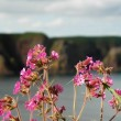 Flowers and an island on background - Stock Photo