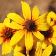 Yellow flowers under bright sun — Stock Photo