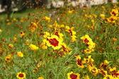 Fleurs jaunes en été — Photo