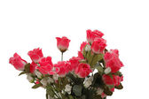 Bouquet of roses isolated on white — Stock Photo