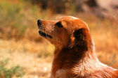 Puppy in summer day (shallow DOF) — Stock Photo