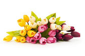 Colourful tulips isolated on the white background — Stock Photo