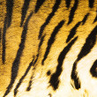 Royalty-Free Stock Photo: Imitation of tiger leather as a background