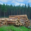 Woodpile in Scottish forest - Stock Photo