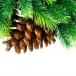 Cone and christmas tree isolated on white — Stock Photo