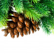 Photo: Cone and christmas tree isolated on white