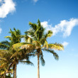 Palms trees on the beach during bright day — Stock Photo #4536113