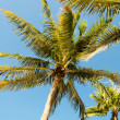Palms trees on the beach during bright day — Stock Photo #4562850