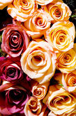 Close up of the many colorful roses — Stock Photo