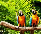 Uccello colorato pappagallo seduto sul pesce persico — Foto Stock