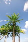 Palms trees on the beach during bright day — Stock Photo