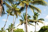 明るい日中にビーチでヤシの木の木 — ストック写真