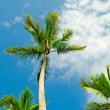 Palms trees on the beach during bright day - Stock Photo