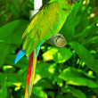 Colourful parrot bird sitting on the perch — Stock Photo #4640155