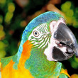 Colourful parrot bird sitting on the perch — Stock Photo #5095333