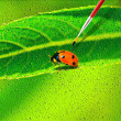 Lady bug drawing on the canvass — Stock Photo #5100784