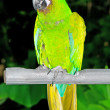 Stock Photo: Colourful parrot bird sitting on the perch