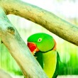 Colourful parrot bird sitting on the perch - Stockfoto