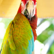 Colourful parrot bird sitting on the perch — Stock Photo #5108301