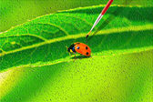 Lady bug drawing on the canvass — Stock Photo