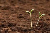 Green seedling illustrating concept of new life — Stock Photo