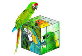 Parrot sitting on the cube — Stock Photo
