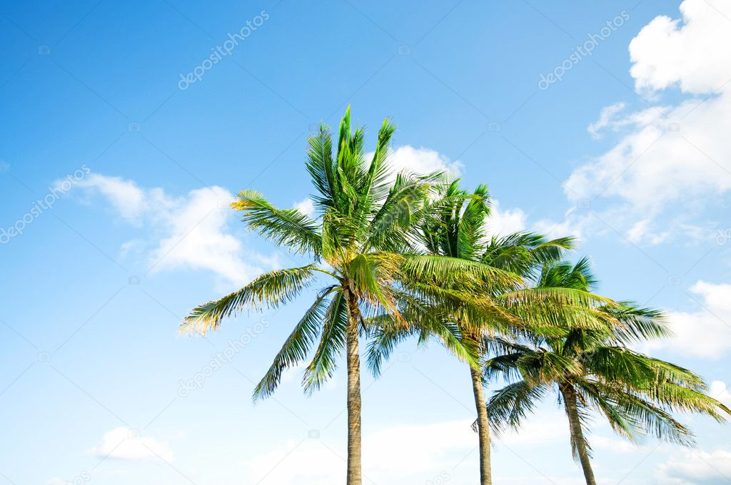 Palms trees on the beach during bright day — Foto de Stock   #5102196