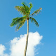 Stock Photo: Palms trees on the beach during bright day