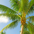 Palms trees on the beach during bright day — Stock Photo #5133414