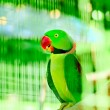 Colourful parrot bird sitting on the perch — Stock Photo #5133555