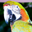 Colourful parrot bird sitting on the perch — Stock Photo #5133646