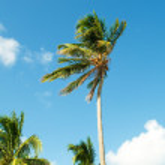 palmeras en la playa durante el día brillante — Foto de Stock