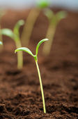 Green seedling illustrating concept of new life — Stockfoto