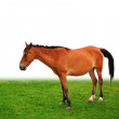 Stock Photo: Brown horse on the grass field